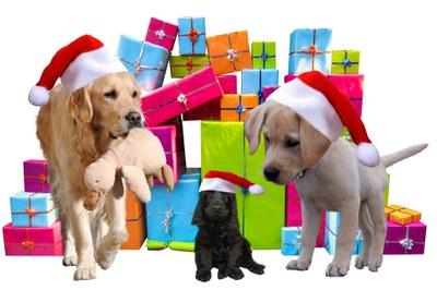 christmas-2983901_1920.jpg