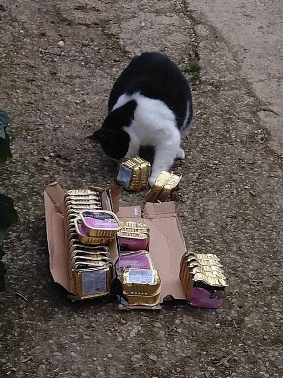 Kater Parsi prüft die Qualität des Katzenfutters, und ist begeistert.